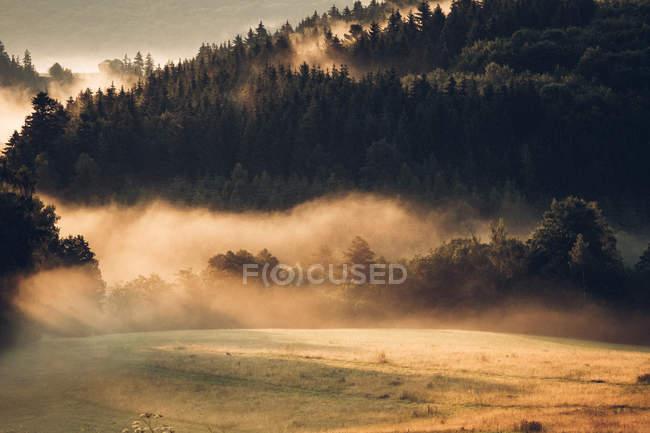 Гірничо-лісового під час заходу сонця — стокове фото
