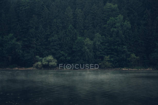 Forest with fir trees on shore of lake — Stock Photo