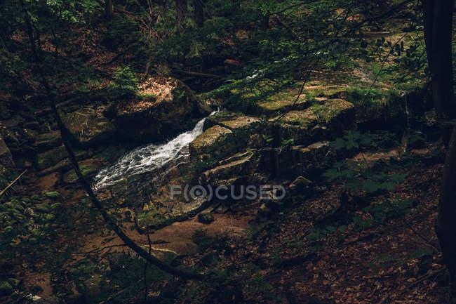 Felsigen Wasserfall im Wald — Stockfoto