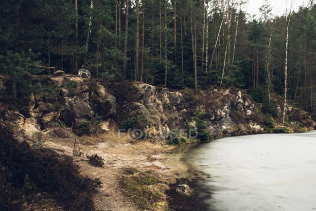 Lac de pins verts sur rives — Photo de stock