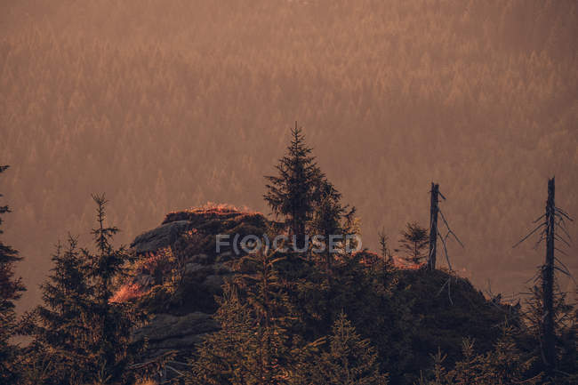 Sommet de la montagne avec des pins — Photo de stock