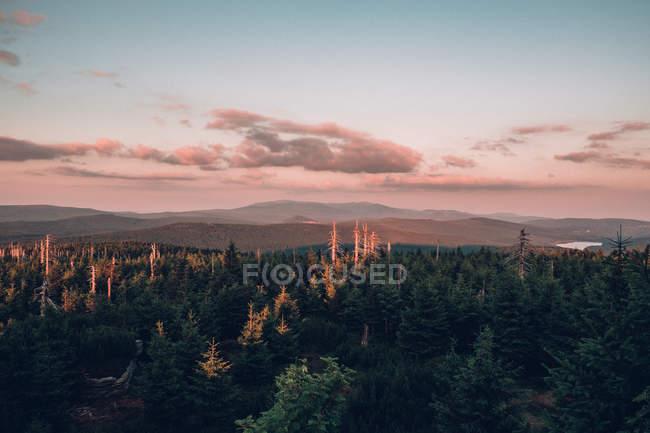 Paysage montagneux de la forêt de revêtement pin — Photo de stock