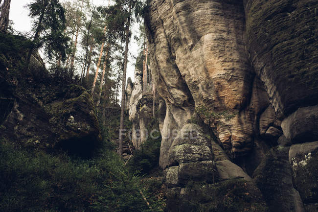 Falaise rocheuse dans la pinède — Photo de stock