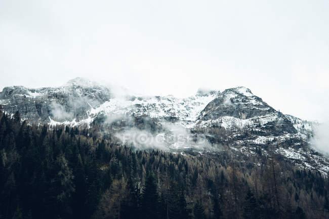 Montagne innevate con pineta sulle piste — Foto stock