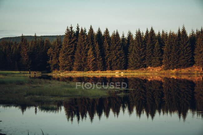 Pini che si riflettono nel fiume calmo — Foto stock