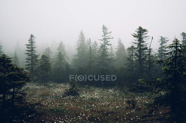 Prado de floresta com elegantes flores brancas — Fotografia de Stock