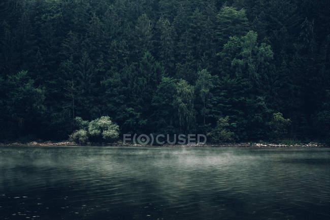 Сосновый лес на склоне горы — стоковое фото