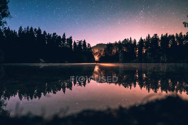 Forêt de pins au bord de la rivière — Photo de stock