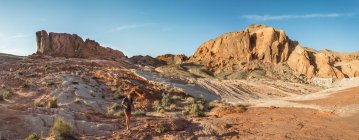 Man hiking at red rock formation in Valley of Fire State Park, Mojave Desert, Nevada, USA — Stock Photo