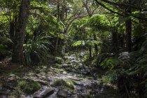 Trail, tropical rainforest — Stock Photo