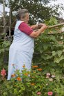 Senior female farmer tying up plants on farm — Stock Photo