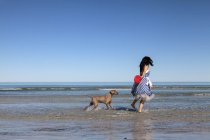 Woman in blue dress playing with Frisbee with Weimaraner dog on beach — Stock Photo