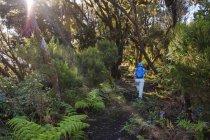 Vista posteriore della donna matura escursioni sul sentiero nella foresta della nube, Parque Natural de Majona, La Gomera, Isole Canarie, Spagna, Europa — Foto stock