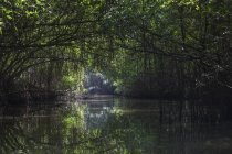 Mangrovenwald und Bentota Ganga Fluß in Sri Lanka, Asien — Stockfoto