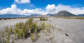 Grass in Caldera mit rauchenden Vulkan Gunung Bromo in Bromo-Tengger-Semeru-Nationalpark, Indonesien, Asien — Stockfoto