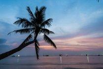 Пальмы на закате на море, залив Таиланда, ко Тао, Таиланд, Азия — стоковое фото