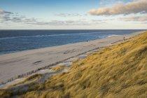 Дюни пляж трава на пляжі Зільт Північно Фризії, Німеччині, Європі — стокове фото