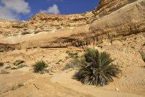 Limestone canyon of Wadi Shuwaymiyah, Dhofar, Sultanate of Oman, Arabia, Asia — Stock Photo