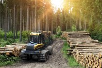 Forestry machine and logs in Thuringian Forest, Thuringia, Germany, Europe - foto de stock