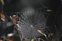 Spider web and autumnal leaves in woodland, close-up. — Stock Photo