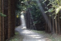 Forest trail with rays of sunshine, Wachau valley, Austria, Europe — Stock Photo