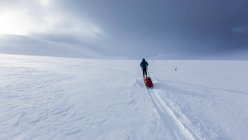 Ski tourer with pulka in snow, Kungsleden trail, Province of Lapland, Sweden, Scandinavia, Europe — Stock Photo