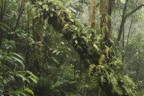 Cloud forest of Santa Elena Reserve in Alajuela province, Costa Rica, North America — Stock Photo