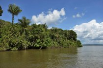 Tropical rainforest by river Rio Tapajos, Pimental, Itaituba, Para state, Brazil, South America — Stock Photo