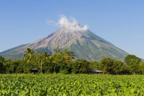 Tobacco field in front of volcano Concepcion, Ometepe, Nicaragua, Central America — Stock Photo