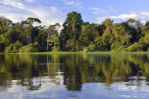 Bank of Rio Solimoes river with flooded forest of Mamiraua reserve, Manaus, Amazonas, Brazil, South America — Stock Photo