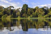 Банк Рио Солимоэс реки с затопленный лес Mamiraua заповедник, Манаусе, Амазонас, Бразилия, Южная Америка — стоковое фото