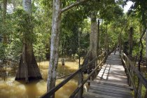 Boardwalk in flooded forest in Manaus, Amazonas State, Brazil, South America — Stock Photo