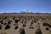 Volcano with ichu grass in Nevado Sajama National Park at border between Bolivia and Chile — Stock Photo