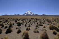 Вулкан, ichu траву в Національний парк Сахама Невадо на кордоні Болівії і Чилі — стокове фото
