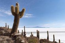 Isla Incahuasi cactus in sale Lago di Salar de Uyuni, Potosi, Bolivia, Sud America — Foto stock