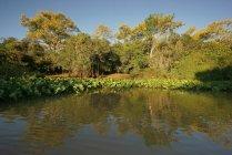 Riverscape in Pantanal, Mato Grosso do Sul, Brazil, South America — Stock Photo