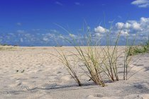 Sandy beach with European beachgrass, Ellenbogen, List, Sylt, North Frisian Islands, North Frisia, Schleswig-Holstein, Germany, Europe — стоковое фото