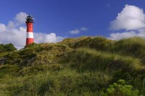 Hornum Lighthouse in green vegetation, Sylt, North Frisian Islands, North Frisia, Schleswig-Holstein, Germany, Europe — стоковое фото