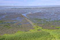 Low tide at Wadden Sea with tidal creeks, Morsum, Sylt, North Frisian Islands, North Frisia, Schleswig-Holstein, Germany, Europe — Stock Photo