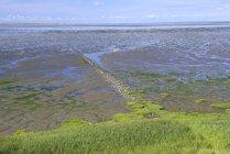 Maré baixa no mar de Wadden com riachos de maré, Morsum, Sylt, Ilhas Frísias do Norte, Frisia do Norte, Schleswig-Holstein, Alemanha, Europa — Fotografia de Stock