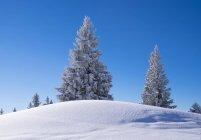 Épinettes enneigées sur les montagnes de Brauneck, Isarwinkel, Haute-Bavière, Bavière, Allemagne, Europe — Photo de stock