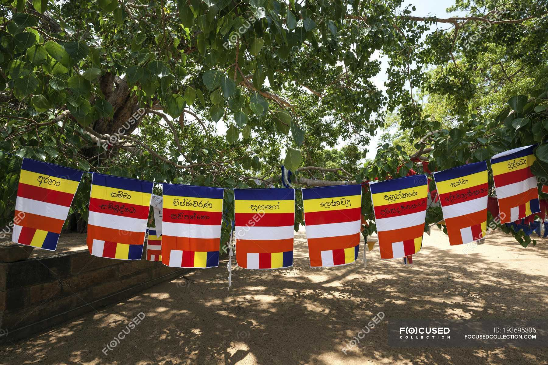 https://st.focusedcollection.com/13064652/i/1800/focused_193695306-International-buddhist-flags-hanging-sacred.jpg