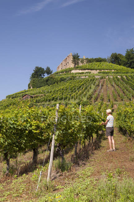 Woman working in vineyard with Staufen castle ruins in background, Baden-Wurttemberg, Germany, Europe — Stock Photo