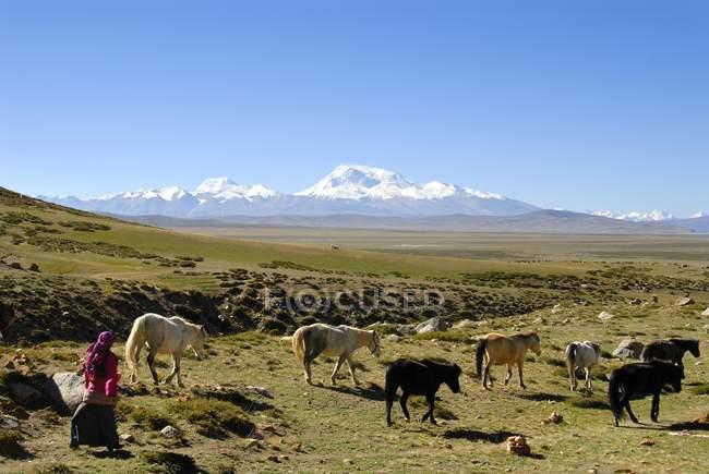 Conducción de caballos a través de la amplia meseta de Pastora - foto de stock