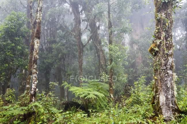 Rainforest at Cerro de la muerte, Costa Rica — Foto stock