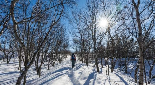 Hiker on path through trees — Stock Photo