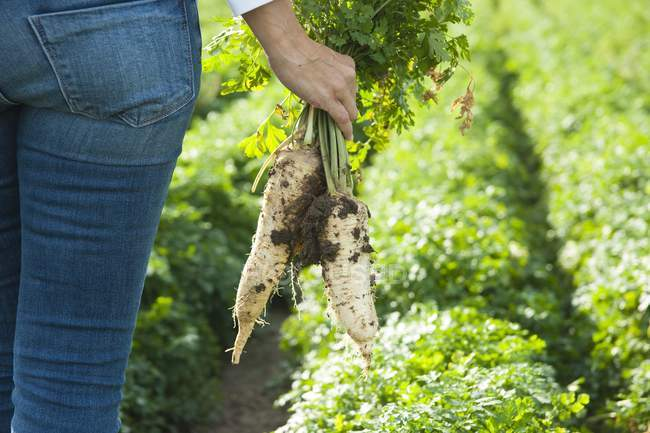 Woman cultivating of radish in field — Stock Photo