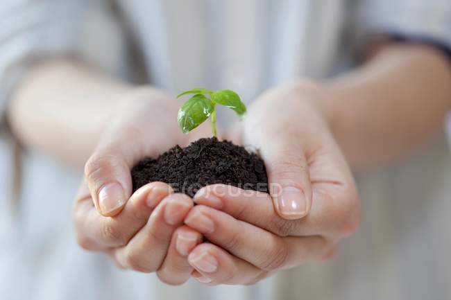 Close-up of hands holding plant sprout in pile of soil — Stock Photo