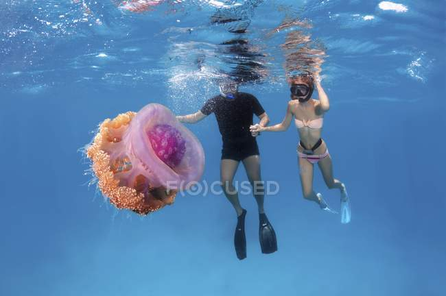 Couple of divers looking at Cauliflower jellyfish in Indian Ocean, Maldives, Asia — Stock Photo