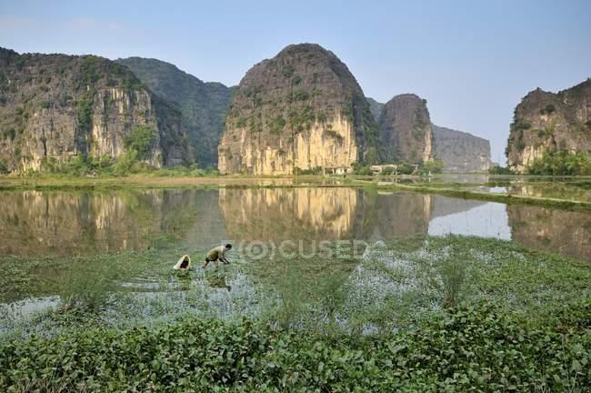 Persone che lavorano a Ninh Binh di asciutto Halong Bay, Vietnam, sud-est asiatico, Asia — Foto stock
